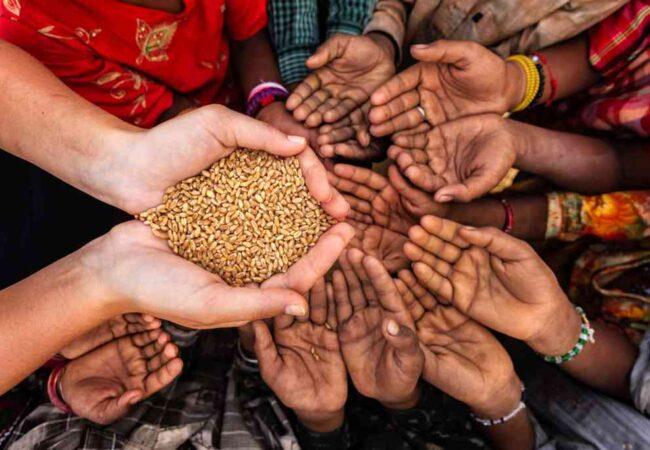 غذا سے غذائیت تک کا بحران